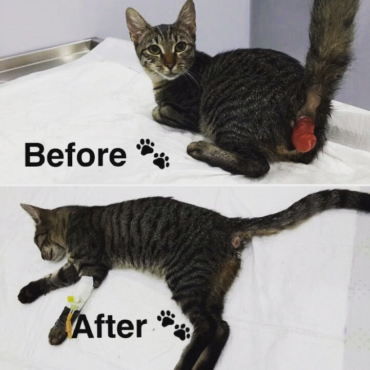 Minnak after the operation