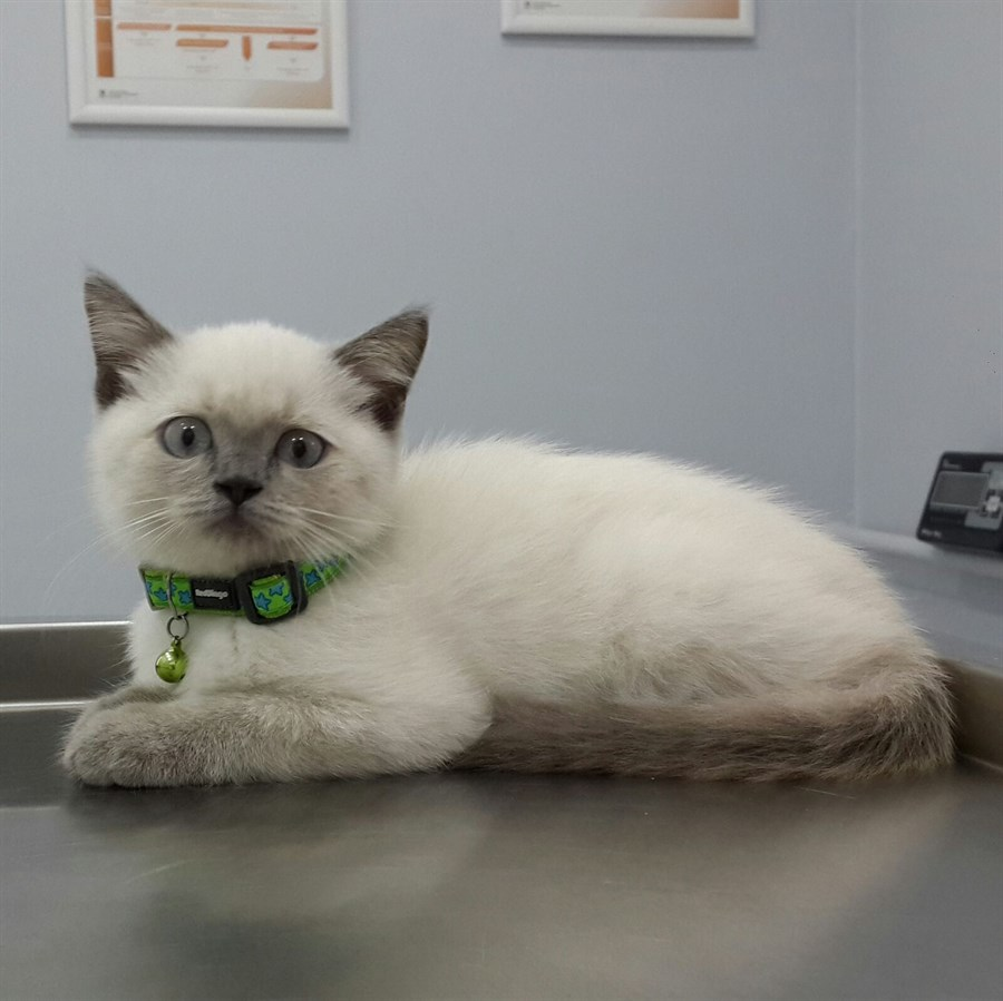 Dipper before vaccination :)