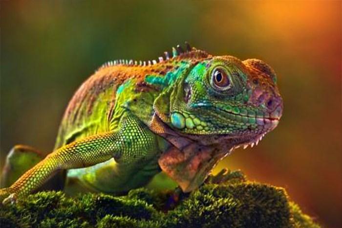 Exotic Animal Examination